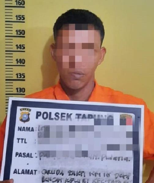 Pria di Tapung ini Kembali Tertangkap Mencuri Sawit PTPN-V untuk Kedua Kalinya