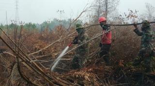 LSM Senarai Dorong Hakim Hukum Maksimal PT WSSI dan PT GSM Atas Kasus Kebakaran di Lahan Konsesi
