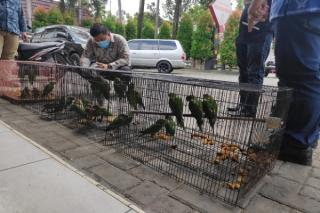 Oknum ASN Pemprov Riau Ditangkap Karena Perdagangkan Satwa Dilindungi di Facebook